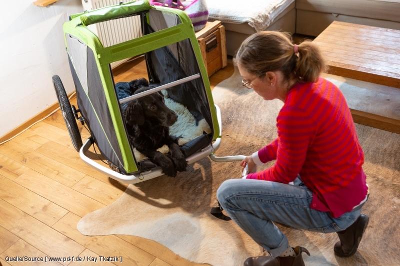 Hundeanhänger: Rollen im Wohnraum